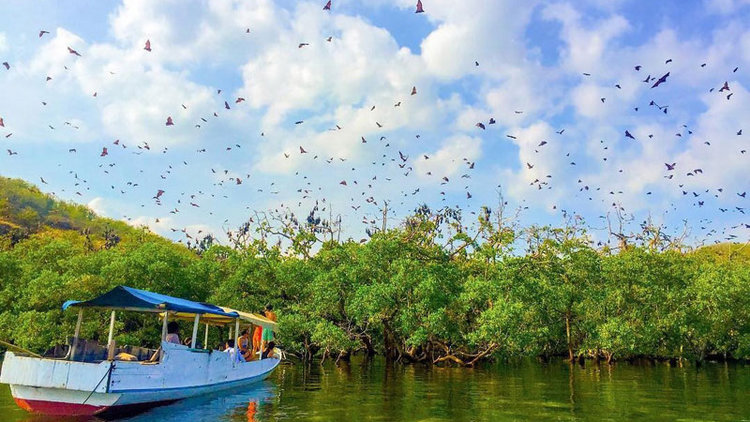 A boat is approaching Kalong Island as hundreds of bats flying away