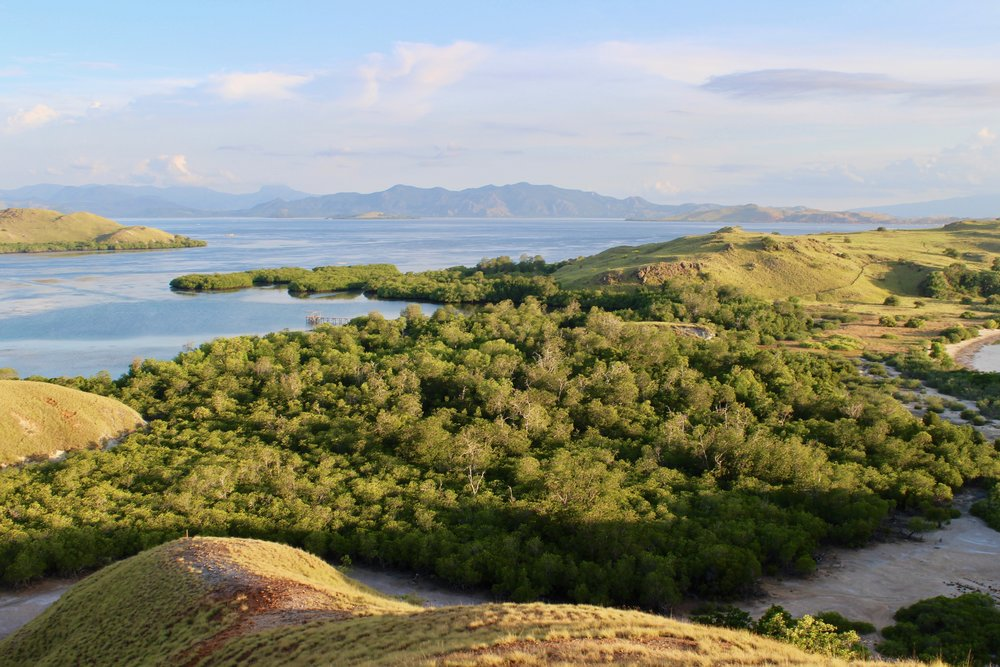 A giant forest in the middle of Sebayur Island filled with green plants