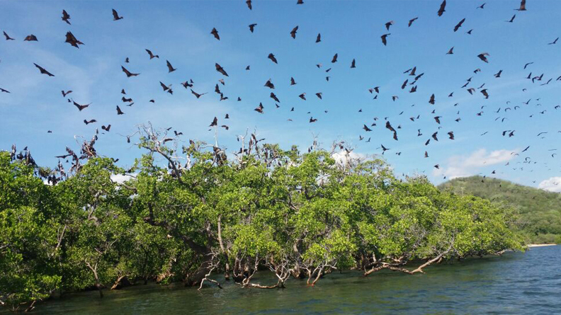 Kalong Island is the home of giant bats that swarming the sky every day
