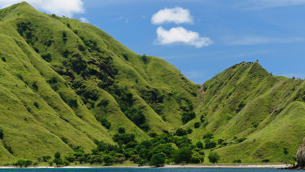 The hills in Komodo Island is filled with green trees and plants | Hello flores
