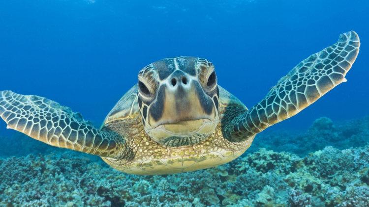 Siaba Besar: Turtle city