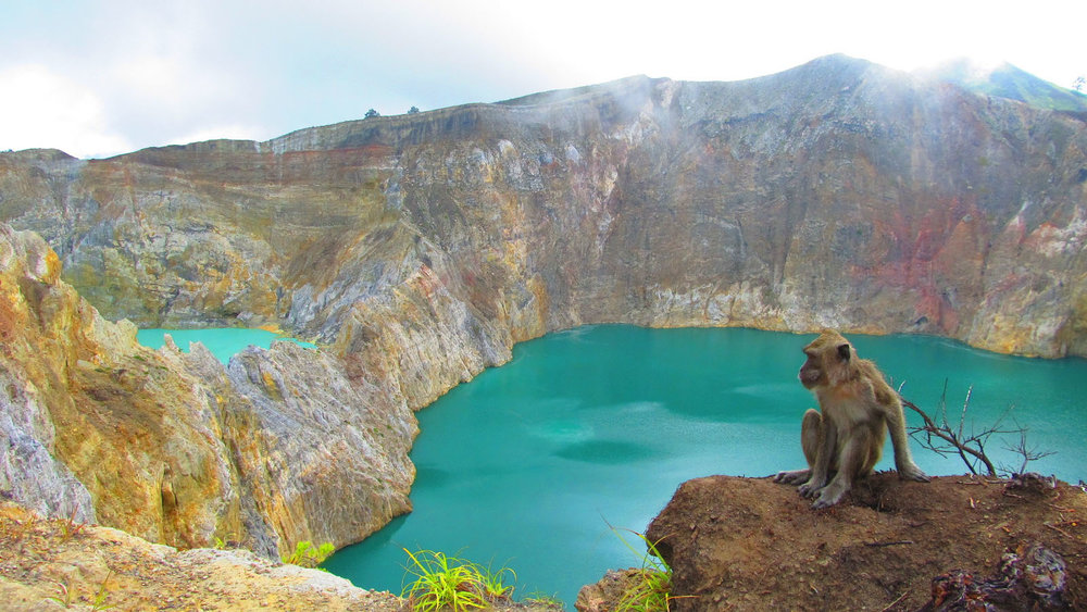A monkey is one of the wild animals that you can find in Kelimutu | Hello Flores