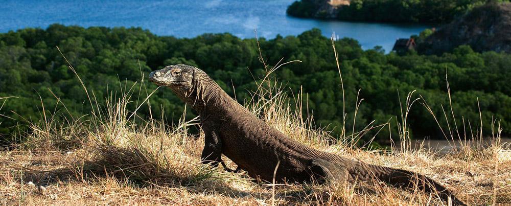 Komodo island | Hello flores