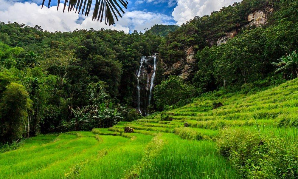 Rice Field Cunca Rami | Hello Flores