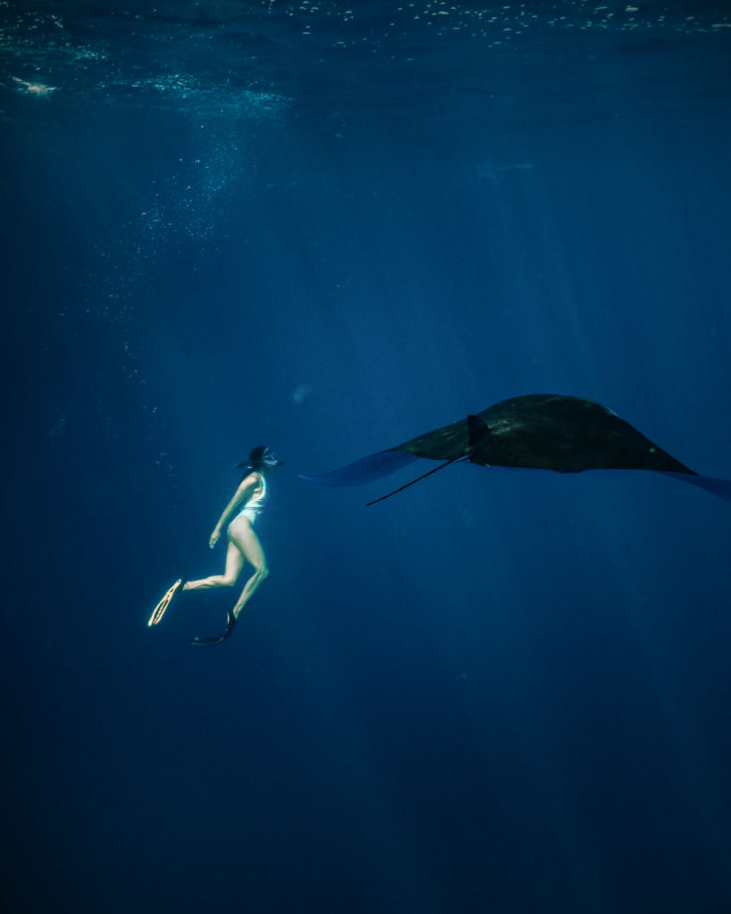 Royal Fortuna Liveaboard Stunning Underwater Dive   Hello Flores