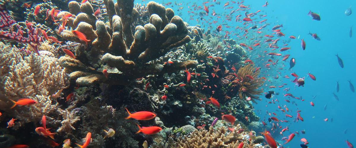coral | Hello Flores