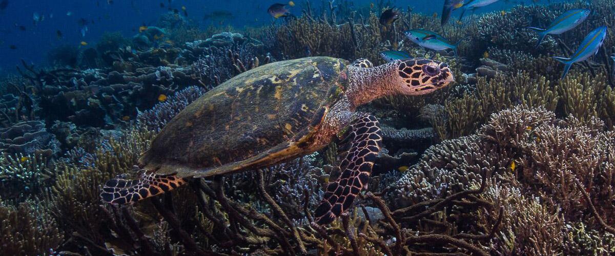 underwater | Hello Flores