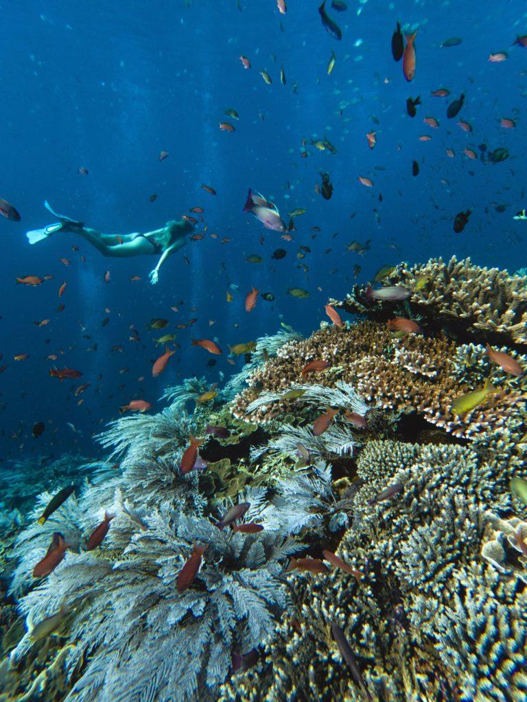 top komodo snorkeling sites | Hello flores
