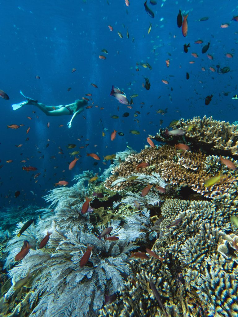 top komodo snorkeling sites